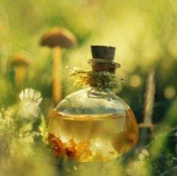 домашние цветы вызывающие аллергию