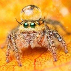 800 миллионов тонн добычи съедают пауки за 1 год