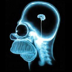 Люди становятся глупее, заявили ученые
