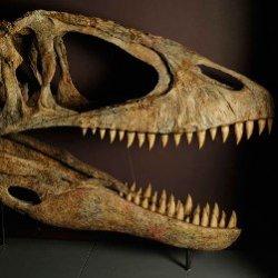 Места обитания динозавров где находят останки аргентинозавра