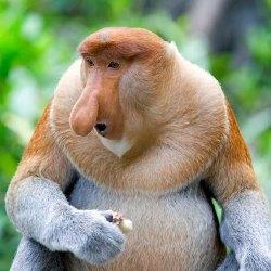 Самые необычные доисторические животные - Удивительный Мир Животных