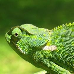 Животное которое меняет цвет