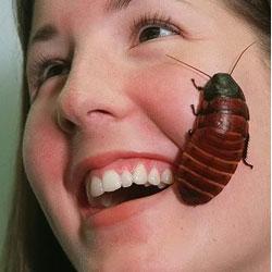 Домашнее насекомое с усами