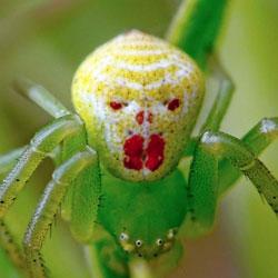 про пауков картинки
