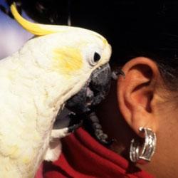 Топ 10 говорящих птиц