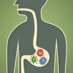 Бактерии в кишечнике управляют нашим мозгом