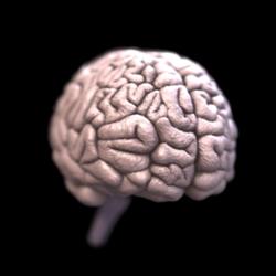 10 мифов о нашем мозге