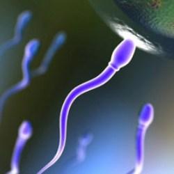 Японские ученые создали сперму из стволовых клеток