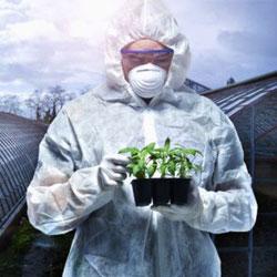 10 фактов о вреде ГМО