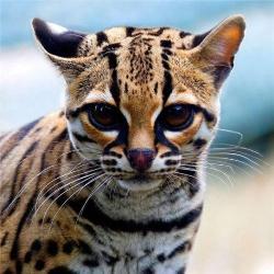 15 необычных видов кошек, о которых вы не знали