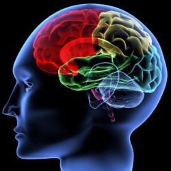 Какой тип интеллекта развит у вас?