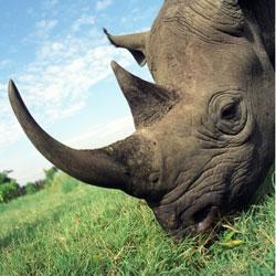 Где обитает носорог