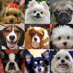 фото мелких собак