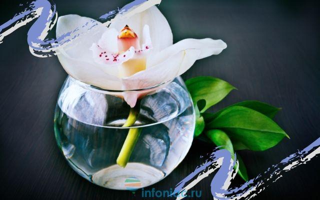orhidea19.jpg