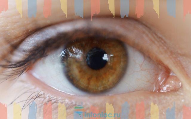 Медный цвет глаз