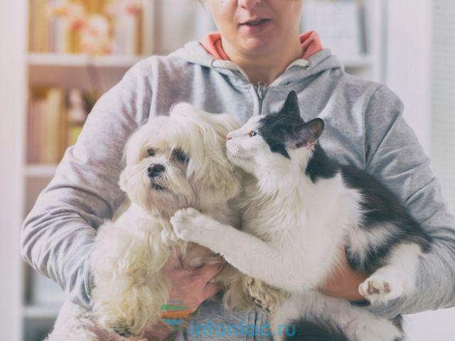 10 вещей, которые произойдут с вашим телом, когда вы заведёте себе собаку, кошку или другого питомца