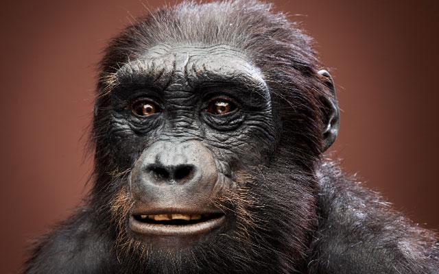 Секс человека и гориллы