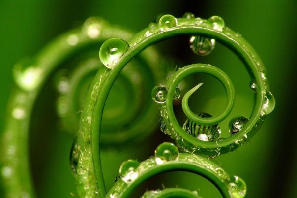 зеленого цвета обои фото