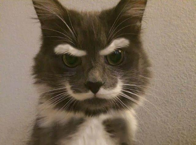23 кошки с самым невероятным окрасом в мире :: Инфониак