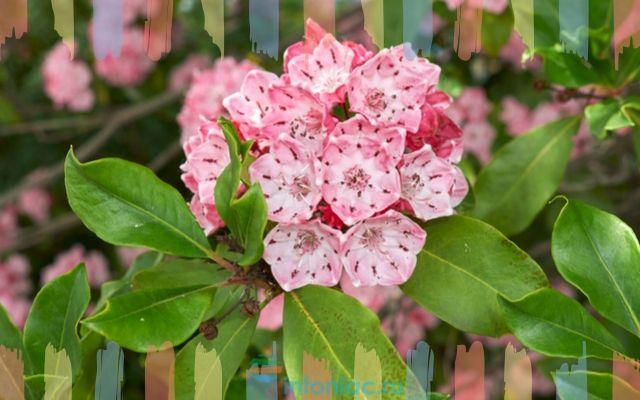 Ядовитые растения цветы