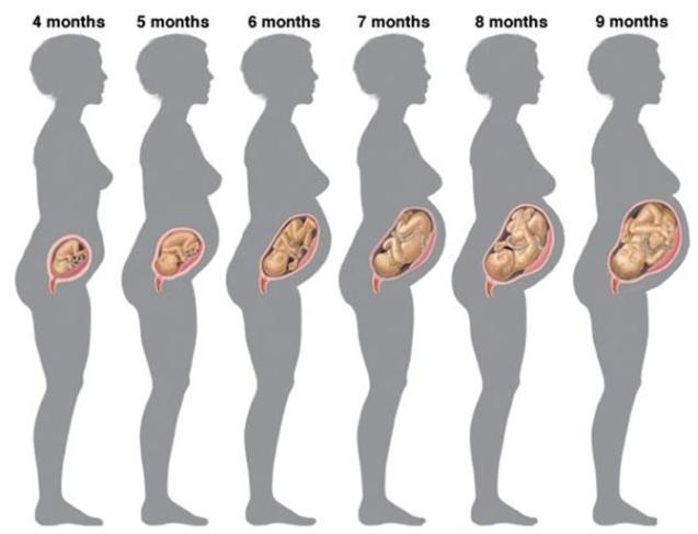 Беременность 5 месяцев. фото
