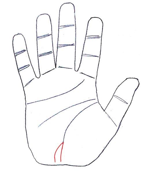 palm-signs3.jpg