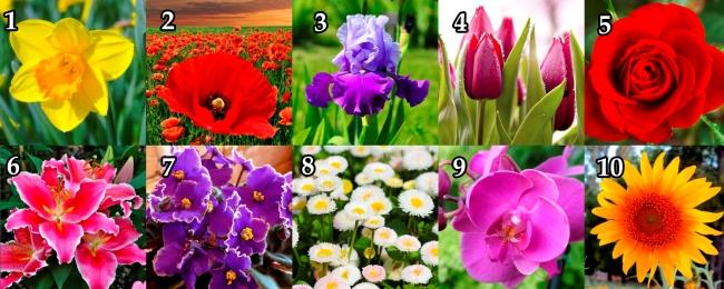 ТЕСТ: Выберите цветок и узнайте о себе секретную информацию