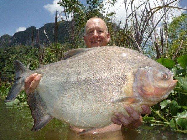 дания фото рыбка
