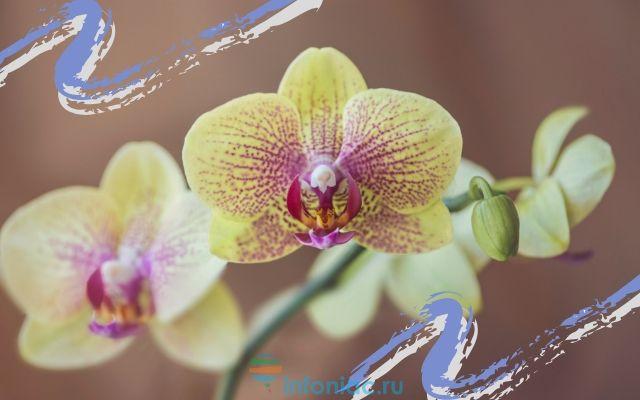 orhidea5.jpg