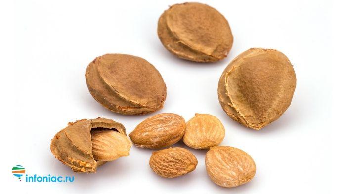 Семена абрикосовых косточек