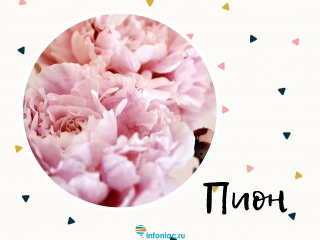 Какие цветы лучше подарить на 8 марта: значение самых известных цветков