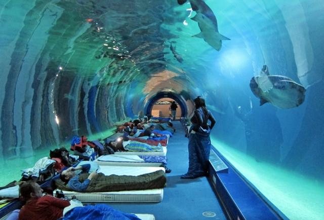 Entradas aquarium valencia