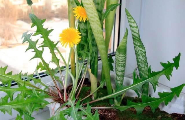 Магические растения