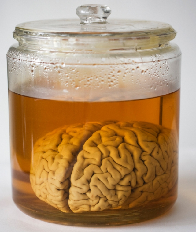 Сколько извилин в мозгу человека