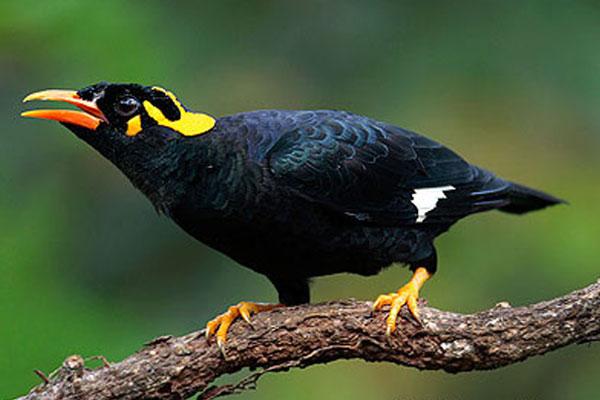 Какие породы попугаев можно научить говорить