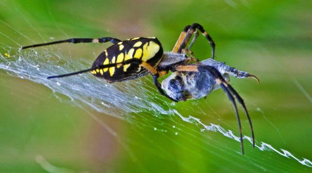 Сколько видом пауков существует на Земле