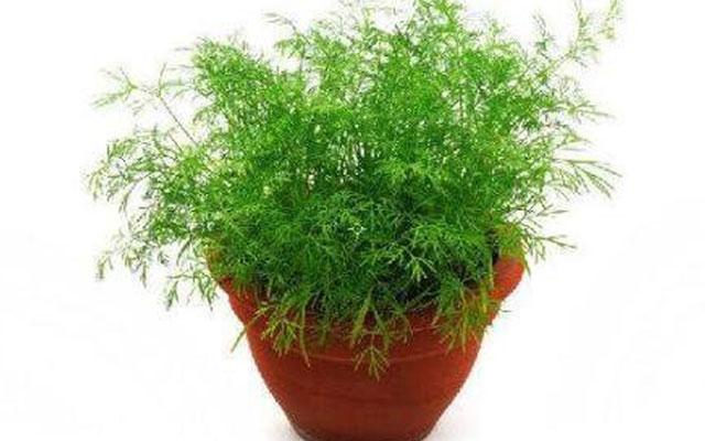 Салат растения282