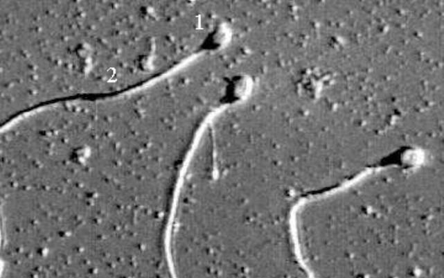 Употребление собсвенной спермы