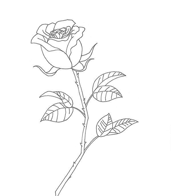 Роза из фоамирана ручной   Bebilv