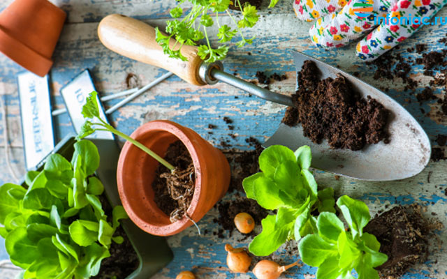 Лунный календарь для растений по дням на октябрь 2020