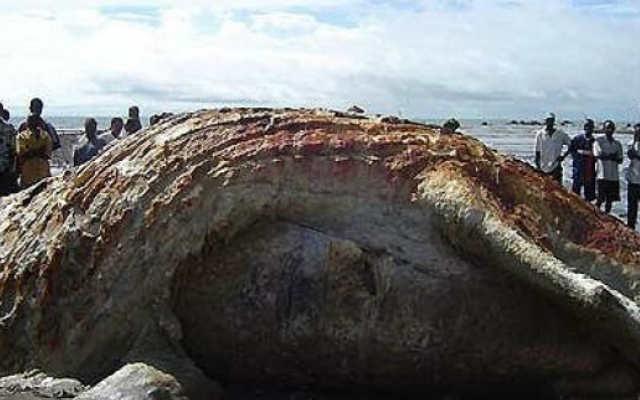 чудовища выброшенные на берег моря фото