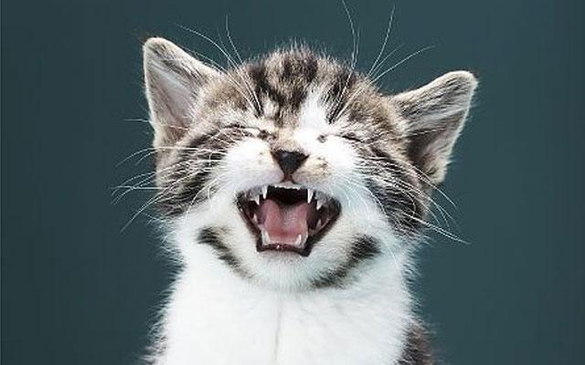Крик кота звуки