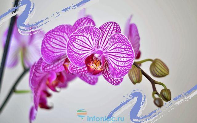 Орхидея все о ней