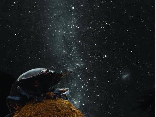 kosmos-17.jpg