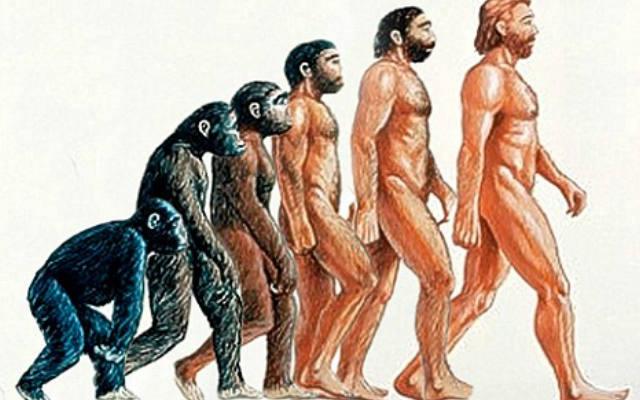 Предки человека стали прямоходящими из за секса
