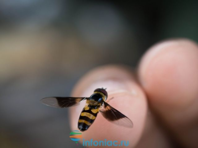 ужалила пчела