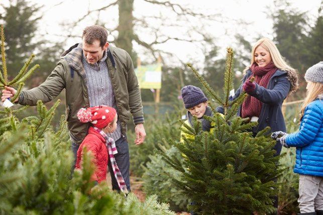 Бизнес на «ЭкоЁлках»: Встретить Новый год, не срубив дерева