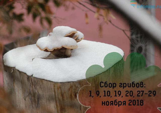 Лунный календарь для растений по дням на ноябрь 2018 (самый полный!)