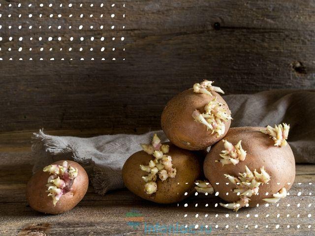 Почему нельзя есть проросший картофель