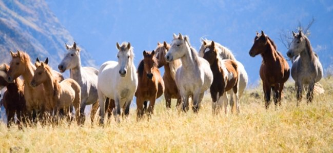 wild horse single parent personals Single catholic women in wild horse, co find a date in the rocky centennial state of colorado whether you're searching for casual colorado dating or serious colorado relationships, matchcom has millions of smart, sexy and attractive singles meant just for you.